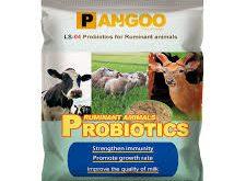 تولید کننده پروبیوتیک دام