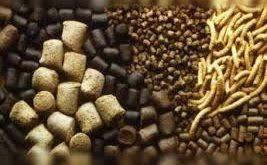فروش عمده پروبیوتیک خوراک آبزیان
