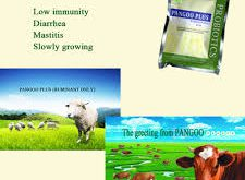 فروش عمده پروبیوتیک گاو
